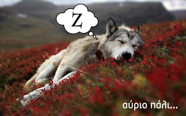 Wolf Sleeping, τέλος.